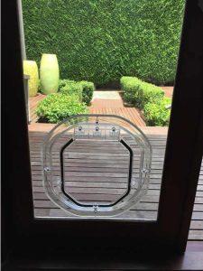 Dogwalk in Glass