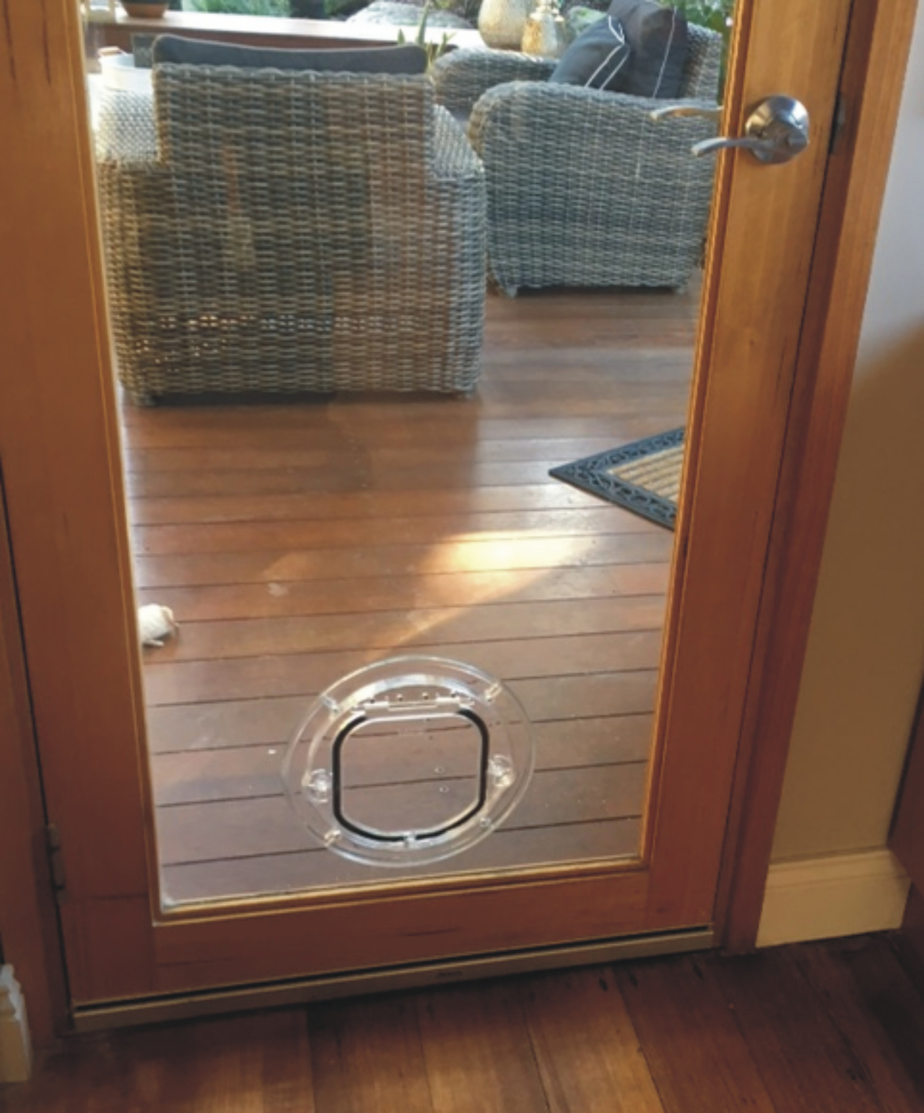 Small Dog Door For Glass Supplied Amp Installed Sydney