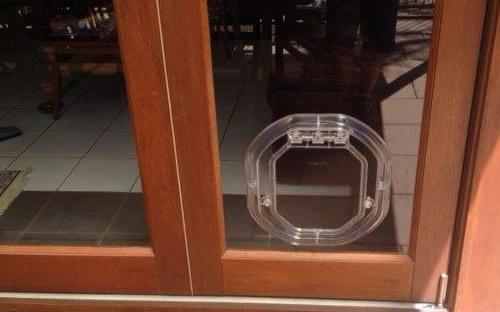 glass_med_dog