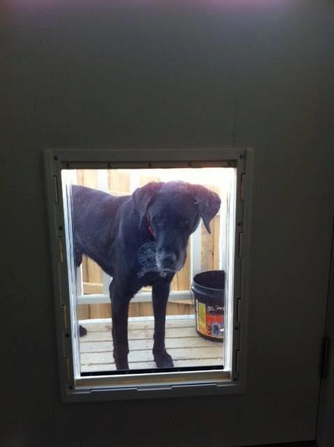 Large Dog Door For Wood Supplied Installed Sydney Pet Doors